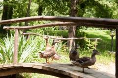 račke-v-parku
